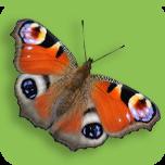 (c) Britishbutterflies.co.uk